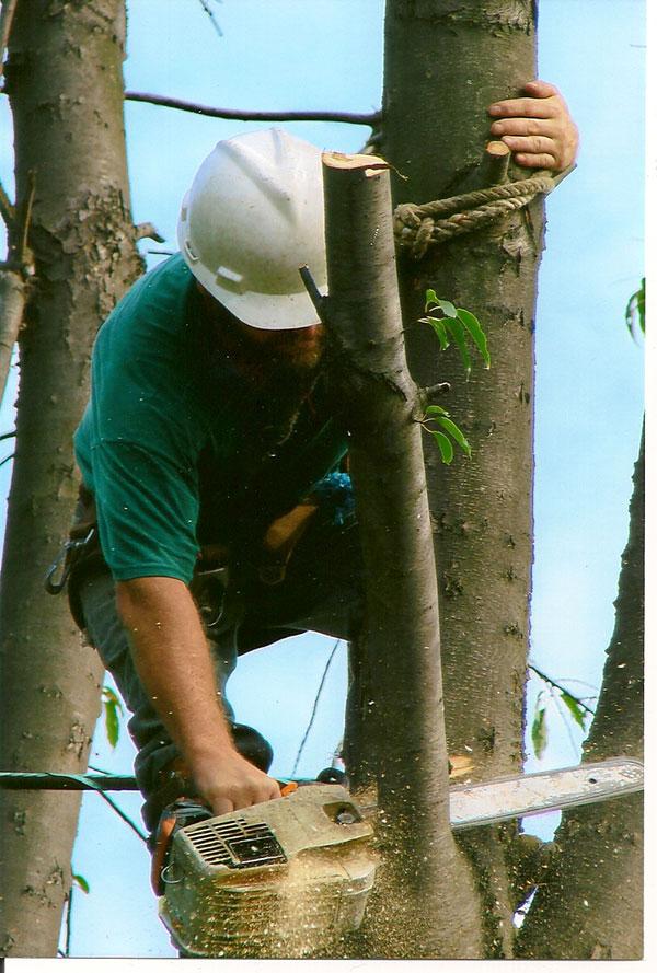 tl-tree-job-020